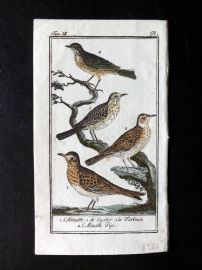 Buffon 1785 Antque Hand Colored Bird Print. Larks, Pipit 9-1